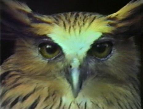 owl_chris_marker